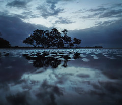 Mangrove tree at low tide_c (gnarlydog) Tags: sky reflection clouds dramatic australia lowtide mangroves lowkey foreshore vintagelens adaptedlens pentax11018mmf28