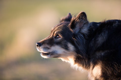 Kuura (T.Nieminen) Tags: dog look 300mm f28 5d3