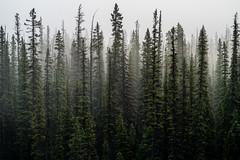 As the heavens fell (Tensevensunstudios) Tags: morning mist mountain snow rain fog sunrise kananaskis nikon banff rockymountains nikkor lakelouise majestic canmore transcanada hwy1 lookslikefilm vscofilm nikkor180edais