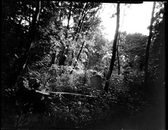 Tower Hamlets Cemetery Park 4 (Tea, two sugars) Tags: ilford ortho film blackandwhite orthochromatic orthochromaticcopyfilm 5x4 4x5 velopex radiographic chemical velopexradiographicchemical xray developer fixer harmantitanpinholecamera4x5 harmantitan harmantitanpinhole pinhole towerhamletscemeterypark towerhamlets cemeterypark tower hamlets cemetery park londonfilmphotographymeetup