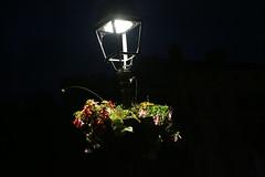 A fleur de nuit (Pi-F) Tags: france fleur lanterne lumire nuit cahors eclairage coffeetime hauteur reverbre