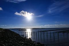sunset at Tainan cigu lagoon) (Charlie ) Tags: canon  2470mm      5dmark3