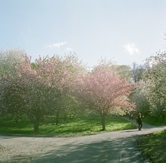 Spring in Prague (Saori_) Tags: flower film rolleiflex czech prague praha