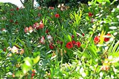flowers _MG_1477 (M0JRA) Tags: flowers trees people gardens orlando walks