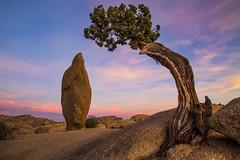 Sunset at Joshua Tree National Park (Xiang&Jie) Tags: sunset tree rock nationalpark twilight desert joshuatree rockformation joshuatreenationalpark