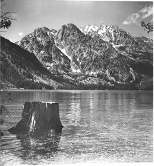 Jenny Lake Stump - Grand Tetons National Park (dungan.robert) Tags: blackandwhite bw photograph wyoming argus 620 grandtetonnationalpark jennylake seventyfive asa100aristaedufomapan copyrightrobertedungan2016