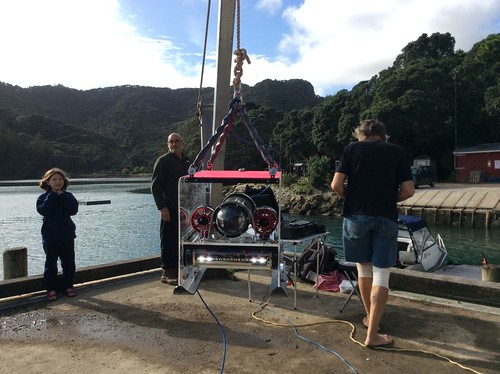 ROV in Port Fitzroy, NZ