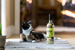 Cantus White Wine (Pamela Greer) Tags: cantus whitewines wine wines