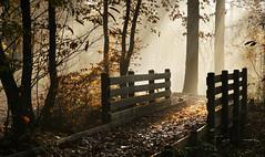 Lumire fugitive (rencarrre) Tags: automne lumire fort brume verrires