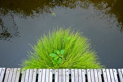 Music for Keyboard & Reeds (violetchicken977) Tags: reeds grasses pontoon riverouse