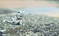 cat (Ayeshadows) Tags: pink blue cute stone cat toy foot kitten colours dof floor cloudy bokeh stripes kitty cuteness minimalism licking depthoffrequency