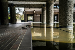Barbican jungle (tomabenz) Tags: street urban reflection london duck streetphotography barbican streetview sonya7rm2 a7rm2