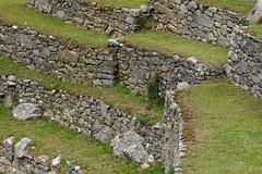 Tarasy uprawne Machu Picchu | Agrocultural terraces of Machu Picchu