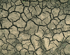 Dry (only lines) Tags: earth dry drought cracked