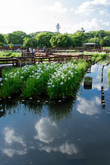 5Yamada Pond Park (anglo10) Tags: flower japan
