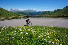 Pordoi curve (Torsten Frank) Tags: alpen blume blte bltenpflanze dolomiten fahrrad gebirge italien kehre kurve pass passopordoi passstrase pflanze radfahren radsport rennrad strase venetien blhen