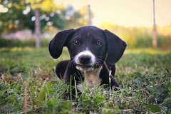 Little mouse (Spahi Anesa) Tags: summer plants dog cute beautiful grass animal puppy colorful little outdoor adorable naure