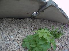 SJCAM M20 test shot (FotoFromFoto) Tags: test shot image latvia riga misa m20 testa rga latvija raitis attls zparks sjcam sjcamm20