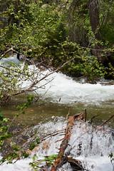 DSD_1572 (pezlud) Tags: grandtetonnationalpark tetonnationalpark landscape rushingwater water mountains nationalpark