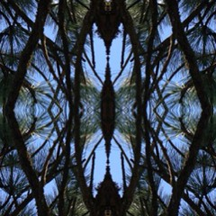"""#cathedral #window #ponderosa #pine #tree #branches #symmetryapp #symmetry #app • <a style=""""font-size:0.8em;"""" href=""""https://www.flickr.com/photos/61640076@N04/8728176688/"""" target=""""_blank"""">View on Flickr</a>"""