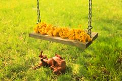 Oh happy day (SolsticeSol) Tags: beautifulflowerpictures beautifulflowerimages brutusbokeh