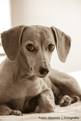 Jully (Pablo Almeida Photo) Tags: dog pet cachorro jully