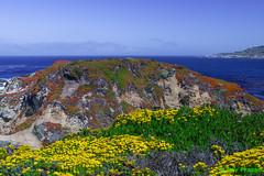 Well Decorated Rock (MCBS-090) (Roy Prasad) Tags: ocean california park leica travel vacation mountain nature walking landscape hiking sony trail pacificocean carmel garrapata prasad nex vario 2890mm elmaritr 5n royprasad nex5n