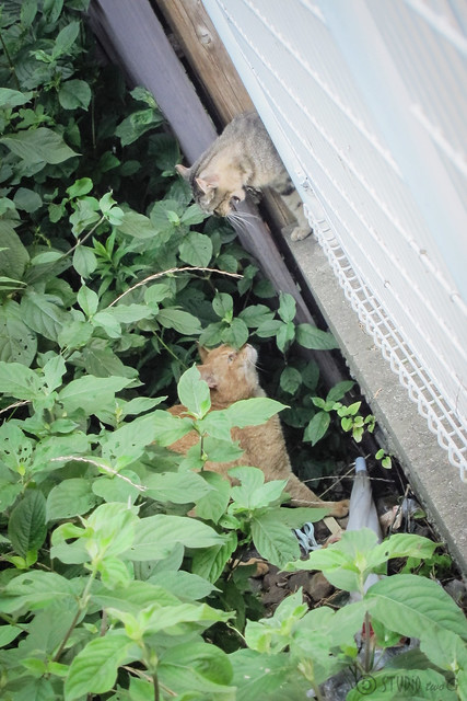 Today's Cat@2013-07-09