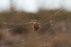 Octolady. (Jorge Dark) Tags: sunset summer sun sol canon spider is spain verano usm araa 1785 mallorca majorca espa 60d