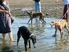 GreyhoundPlanetDaySept132009025
