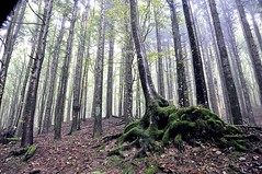 RooTS (Claudia Gaiotto) Tags: wood autumn trees nature fog forest roots nebbia athmosphere