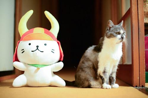 animal cat doll 猫 miyako 動物 ゆるキャラ みやこ nikond4 hikonyan ひこにゃん nikonafsnikkor50mmf14g