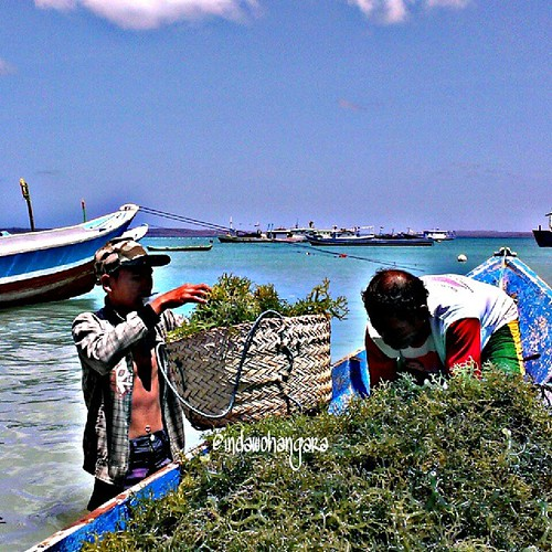 Harvest. #seaweed #farmers #sea #tablolong #beach #kamerahpgw #HTCOne #hdr #PicArt #indonesiaindah #instakupang #instanusantara #tapaleuk #tapaleukukurkaki #bajakan #kakikareta #TravellerKaskus