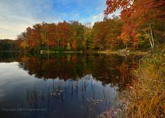 The Spectrum of Autumn (pdxsafariguy) Tags: autumn trees lake reflection grass seasons foliage westvirginia lilypad tomschwabel babcockstatepark boleylake
