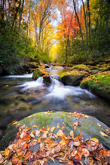 Silky Autumn Stream in the Smokies (dfikar) Tags: park travel autumn plant mountains green fall nature wet water colors leaves river flow waterfall nationalpark woods rocks colorful stream outdoor hiking tennessee branches smooth peaceful calm boulders serene flowing wilderness cascade smokies tranquil tremont littleriver greatsmokymountainsnationalpark tremontroad lynncampprong