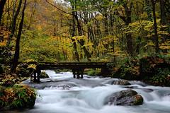 DSC_1097~1   (michaeliao27) Tags: mountain landscape stream    oirase