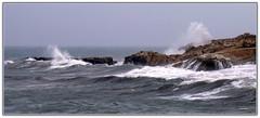 Maestrale (Schano) Tags: panorama costa landscape mediterranean mediterraneo mare paesaggio gabbiano onde trapani onda maestrale mareggiata panasoniclumixdmcfz28 panasonicfz28 panasonicdmcfz28 panasoniclumixfz28