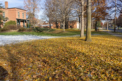 Ginkgo leaves on the ground (Edsel L) Tags: autumn ohio college unitedstates oberlin gingkoleaves oberlincollege rx1r