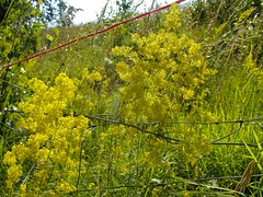 Orsieres - Martigny (12.07.13) 72 (rouilleralain) Tags: valais sembrancher valdentremont stbernardexpress orsires viafrancigena