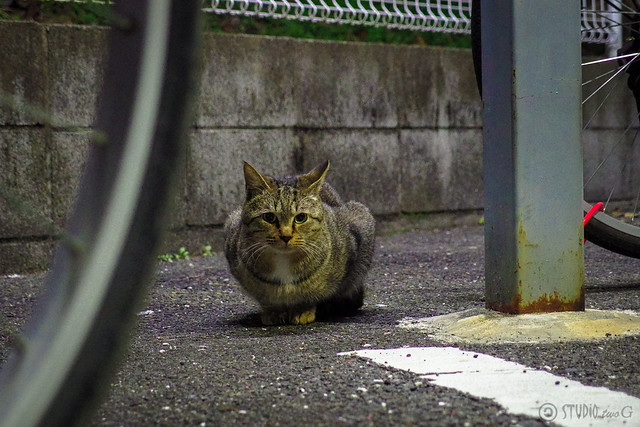 Today's Cat@2014-01-15