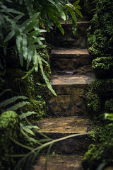 Steps (SauceyJack) Tags: park winter plants chicago nature floral flora conservatory lincoln february cookcounty 2014 lr5 10028l lightroom5 canon1dx sauceyjack