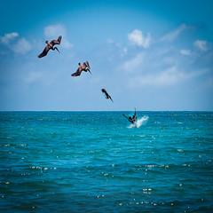 sea food ecuador fishing pelican galapagos