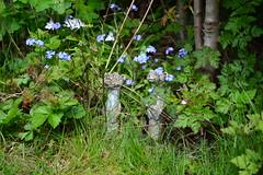 Hidden (Mxziton) Tags: green garden meerkat nikon shade d3100