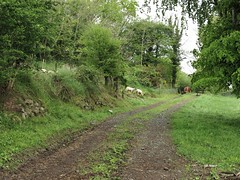Off to new horizons (Rona's whereabouts) Tags: ireland tree green nature rural season us spring scenery sheep path walk country may run together herd dm discover newhorizon