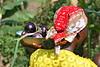 Congolese Refugees - Rwamwanja, Uganda (EU Humanitarian Aid and Civil Protection) Tags: refugees echo conflict uganda unhcr drc displacement easterncongo rwamwanja