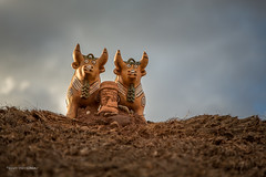 2014-09-24_21-57-329999 (Catherine Gidzinska and Simon Gidzinski/grainconno) Tags: roof holiday peru southamerica bull figurine geckos sillustani 2014 punoregion