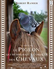 Le Pigeon qui murmurait  l'oreille des chevaux (Damien Patard Photographie) Tags: robert pigeon oreille pastiche homme affiche chevaux cinma redford ramier murmurait