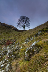 Sycamore Gap - Hadrian's Wall. (Callaghan69) Tags: uk longexposure winter tree wall landscape roman landmark le slowshutter iconic hadrianswall craglough sycamoregap robinhoodstree tokina1116 nikond7100
