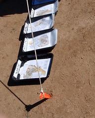 011 Safety Hazard At Map Pickup (saschmitz_earthlink_net) Tags: california start map rope orienteering aguadulce vasquezrocks losangelescounty 2015 laoc losangelesorienteeringclub