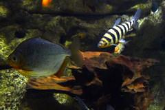 Aquarium de Paris  (28) (Mhln) Tags: paris aquarium requin poisson trocadero poissons meduse 2015 cineaqua